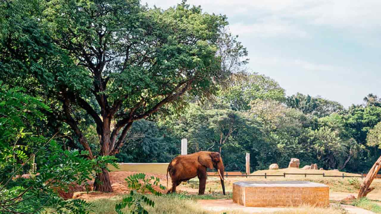 Sri Chamarajendra Zoologica